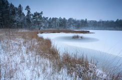 Frozen forest lake in winter Royalty Free Stock Image