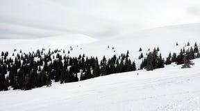 Frozen forest Stock Photos