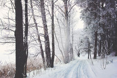 Frozen forest with snow Royalty Free Stock Image