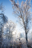 Frozen forest during sunrise. Royalty Free Stock Photos