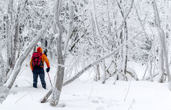 Frozen forest. Royalty Free Stock Photos