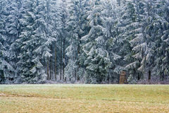 Frozen forest. Frozen trees in the forest - winter has arrived Stock Images