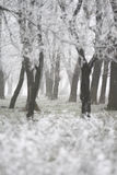 Frozen forest - winter detailed abstract. A detailed view of a frozen forest in winter Stock Photos