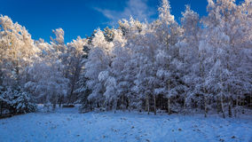 Frozen forest in winter in sunny day Stock Photography