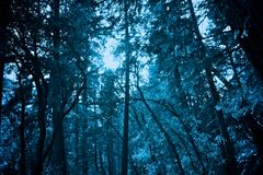 The Frozen Forrest. A serene frozen icy forrest royalty free stock photo