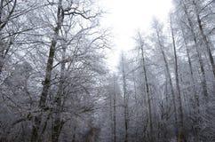 Frozen forset Stock Photography
