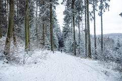 Frozen forset stock photos