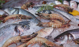Frozen fresh fish and shrimp Royalty Free Stock Images