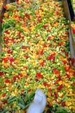 Frozen fresh vegetables Stock Images