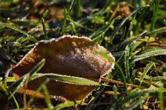 Frozen and frost-covered leaves on an early winter morning, close view stock photo