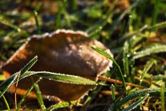 Frozen and frost-covered leaves on an early winter morning, close view stock image