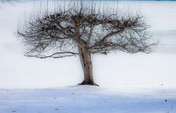 Frozen fruit tree. Keuka lake winter Royalty Free Stock Image
