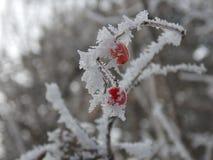 Frozen fruits Stock Image