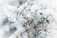 Frozen fur-tree branch Stock Photography