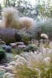 Frozen garden. With grasses and perennials royalty free stock images