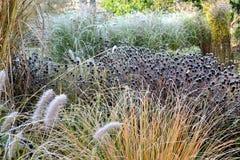 Frozen garden Stock Images