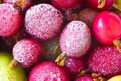 Frozen Gooseberries. Frozen red green pink gooseberries Stock Image