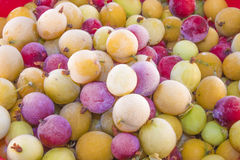 Frozen gooseberries ribes uva-crispa Royalty Free Stock Photography