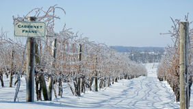 Frozen Grape Vines Royalty Free Stock Photos