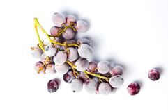 Frozen grapes cluster on white background Stock Photos