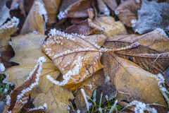 Frozen gras and leafs Royalty Free Stock Photos