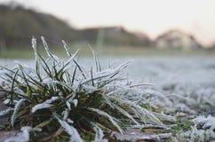 Frozen gras Stock Image