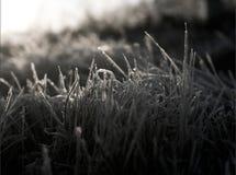 Frozen grass. Early December frozen back lit grass near ground. Europe, Czech Republic Stock Photography