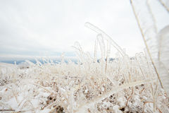 Frozen grass Stock Photos