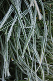 Frozen grass. Close up of frozen grass Royalty Free Stock Photo