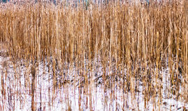 Frozen grass Stock Photography