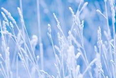 Frozen grass Stock Photography