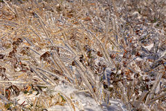 Frozen grass. In autumn after ice rain royalty free stock image