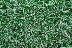 Frozen grass background Royalty Free Stock Images