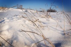 Frozen grass. Branch in winter stock photography