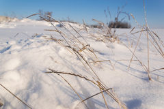 Frozen grass. Branch in winter royalty free stock photo