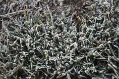 Frozen grass close up stock photos