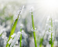 Frozen grass close up. Nature background Stock Photography