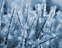 Frozen grass close up. Royalty Free Stock Images