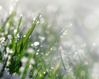 Frozen grass close up. Royalty Free Stock Image