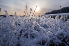 Frozen grass. Stock Photography