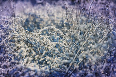 Frozen grass Royalty Free Stock Photo