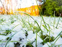 Frozen grass. A close up of frozen grass in winter Stock Photo