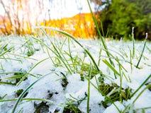 Frozen grass. A close up of frozen grass in winter stock photo