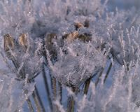 Frozen grass on a frosty day Stock Photography
