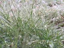 Frozen grass. Frozen green grass Royalty Free Stock Photo