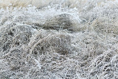 Frozen grass Stock Images