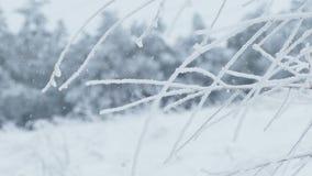 Frozen grass ice snow winter pretty. Frozen  grass ice snow winter pretty stock video