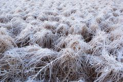 Frozen grass with ice Stock Photography