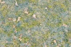 Frozen grass and leaves. Royalty Free Stock Photo