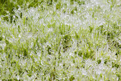 Frozen grass Royalty Free Stock Images
